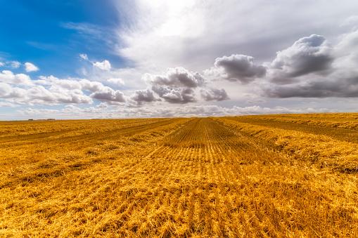 East Lothian「UK, Scotland, East Lothian, harvested field of barley」:スマホ壁紙(9)