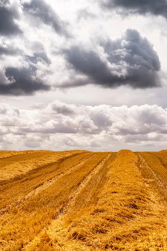 East Lothian「UK, Scotland, East Lothian, harvested field of barley」:スマホ壁紙(2)