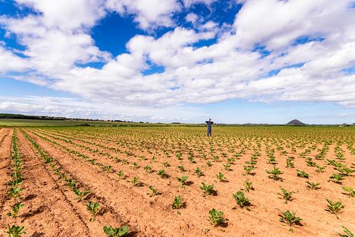 East Lothian「UK, Scotland, East Lothian, Scarecrow in a Brussels Sprout field」:スマホ壁紙(18)