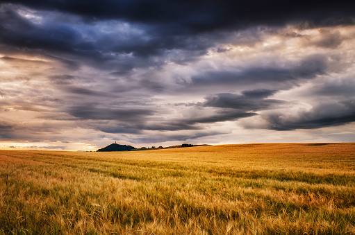 East Lothian「Scotland, East Lothian, Field of barley at sunset」:スマホ壁紙(4)