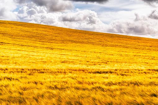 East Lothian「UK, Scotland, East Lothian, field of barley」:スマホ壁紙(17)
