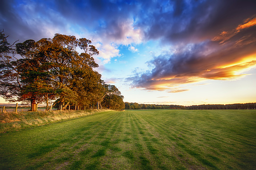 East Lothian「Scotland, East Lothian, field of grass at sunset」:スマホ壁紙(7)