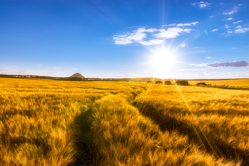 East Lothian「UK, Scotland, East Lothian, field of barley with tracks at sunset」:スマホ壁紙(9)
