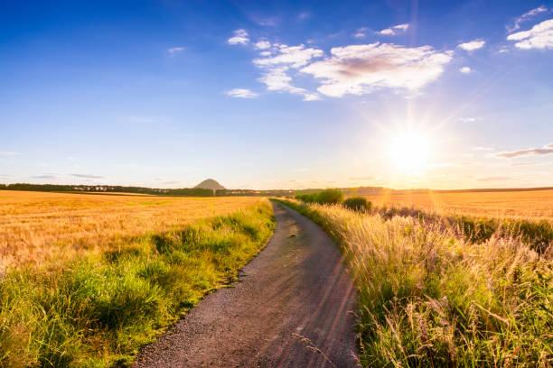 UK, Scotland, East Lothian, dirt track in between fields of barley at sunset:スマホ壁紙(壁紙.com)