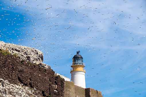 East Lothian「UK, Scotland, East Lothian, lighthouse on Bass Rock and a colony of Northern Gannets」:スマホ壁紙(1)
