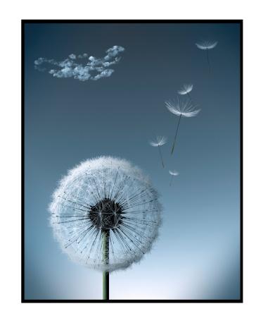 たんぽぽ「Dandelion gone to Seed, some Seeds Fly away」:スマホ壁紙(14)