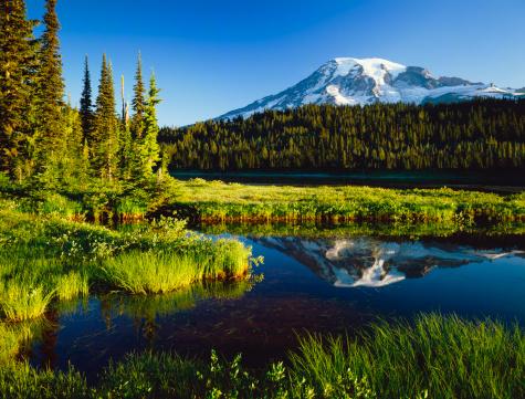 レーニア山国立公園「実装ます。レニエ国立公園」:スマホ壁紙(19)