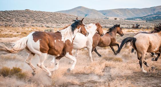 Horse「Horses in the wild」:スマホ壁紙(19)