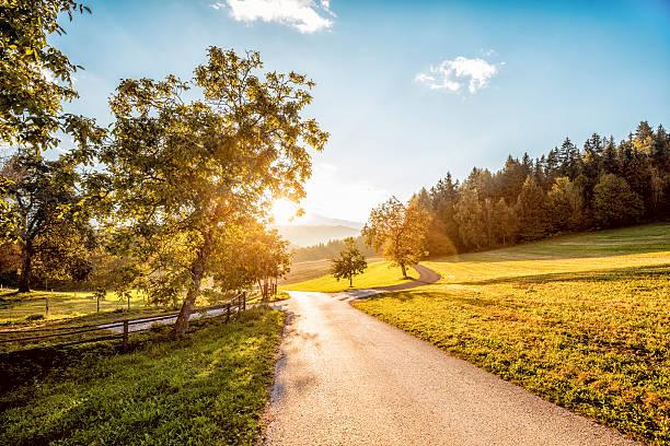 Austria, Carinthia, Ludmannsdorf, country road, forest in autumn, against the sun:スマホ壁紙(壁紙.com)