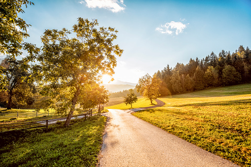 Country Road「Austria, Carinthia, Ludmannsdorf, country road, forest in autumn, against the sun」:スマホ壁紙(1)