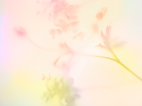 Pastel「Multi colored abstract background of the flower」:スマホ壁紙(1)