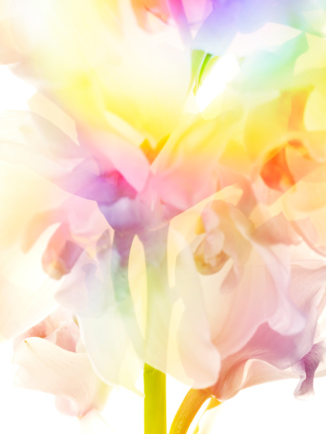 Softness「Multi colored abstract background of the flower」:スマホ壁紙(6)