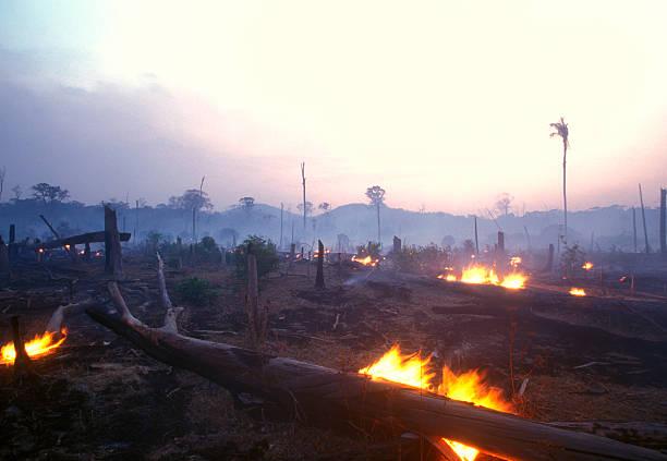 Landscape image of a burning forest at dusk:スマホ壁紙(壁紙.com)