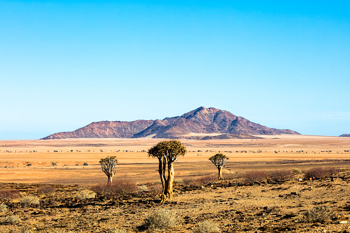Savannah「Landscape in Namibia」:スマホ壁紙(4)