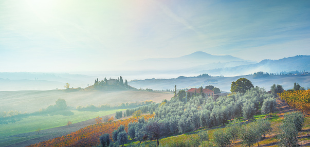 Val d'Orcia「Landscape in Tuscany, Italy with vineyard and olive tree plantation」:スマホ壁紙(9)