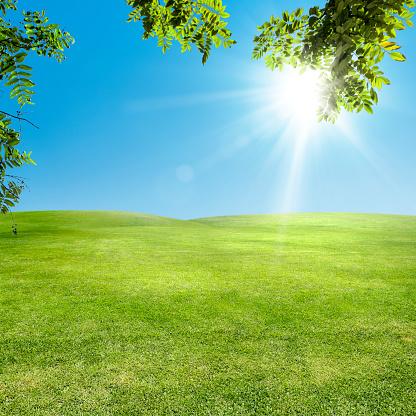 Ecosystem「Landscape image of empty green grass field over sunny sky」:スマホ壁紙(4)