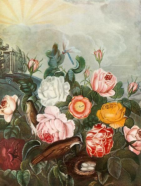 Petal「Roses」:写真・画像(4)[壁紙.com]