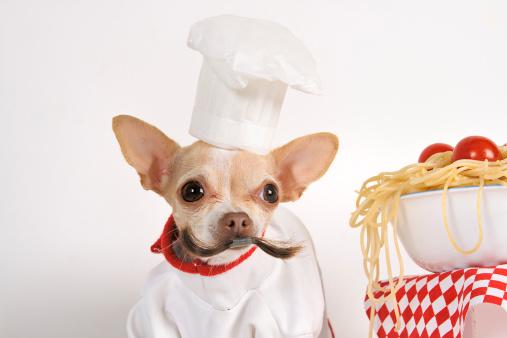 Chihuahua - Dog「chef」:スマホ壁紙(11)
