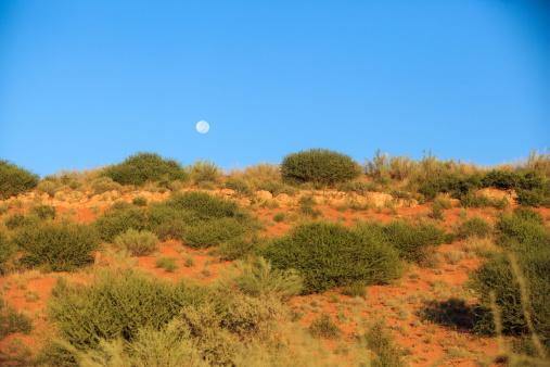 Botswana「A bush-covered dune and blue sky, Kgalagadi Transfrontier Park, Botswana, South Africa」:スマホ壁紙(19)