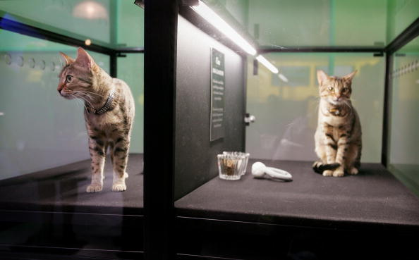 動物「Future Innovations On Display At NextFest」:写真・画像(7)[壁紙.com]