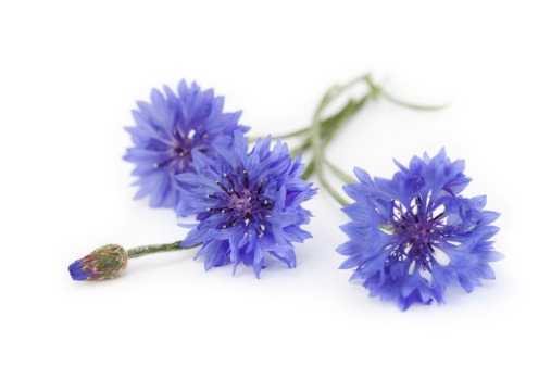 Wildflower「Blue Cornflower Bouquet, Wildflowers」:スマホ壁紙(1)