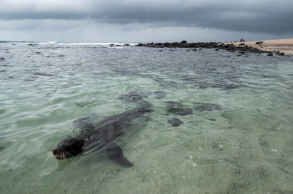 Shallow「Nature and Human Lives Seek Equilibrium In Galapagos」:写真・画像(0)[壁紙.com]