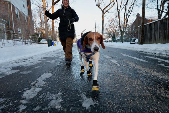 Shoe「Heavy Snow And Frigid Temperatures Settle Over Washington DC」:写真・画像(12)[壁紙.com]