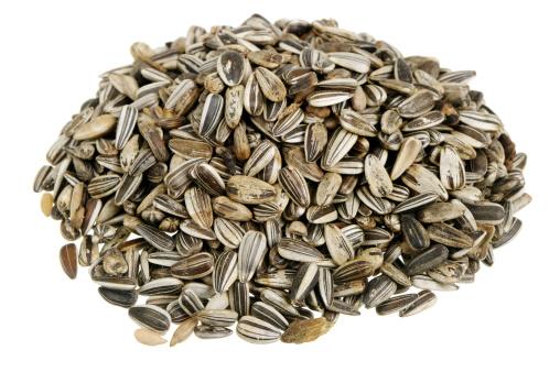 Bird Seed「Sunflower Seeds」:スマホ壁紙(8)