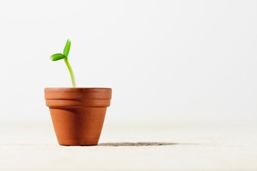 ひまわり「Sunflower seedling in a pot」:スマホ壁紙(13)