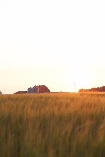 Hayward Field「Open field with farm in background」:スマホ壁紙(2)
