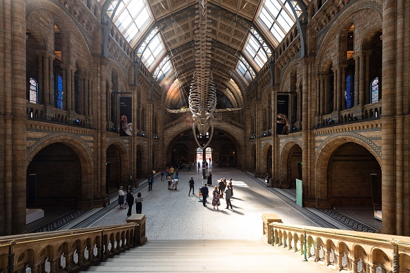Natural History Museum - London「The Natural History Museum Reopening」:写真・画像(14)[壁紙.com]