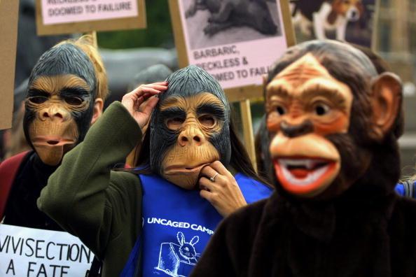 Primate「Animal Rights ''Primate Protest'', London.」:写真・画像(13)[壁紙.com]