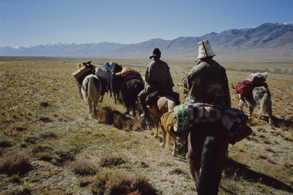 Wild Cattle「Schaller Expedition」:写真・画像(17)[壁紙.com]