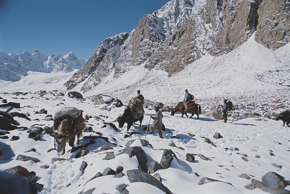 Wild Cattle「Schaller Expedition」:写真・画像(18)[壁紙.com]