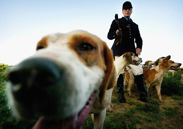 Government To Announce Hunting Bill:ニュース(壁紙.com)