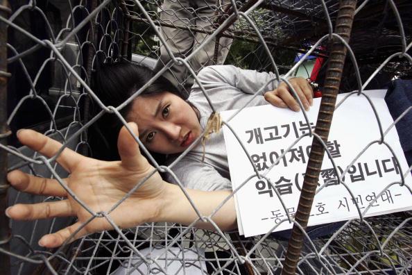韓国「PETA Protest Against The Eating Of Dog Meat In Korea」:写真・画像(8)[壁紙.com]