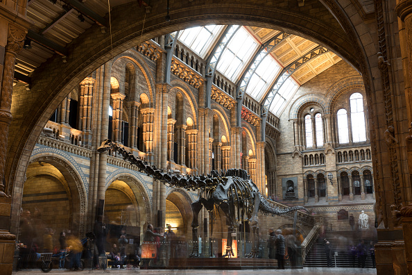 Natural History Museum - London「Last Day At The Museum For Dippy The Diplodicus」:写真・画像(5)[壁紙.com]
