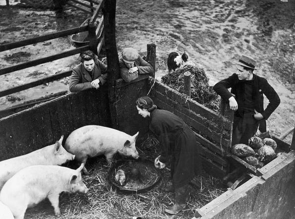 Pen「Greedy Pigs」:写真・画像(16)[壁紙.com]