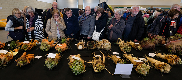 Carrot「Entrants To The Harrogate Flower Show Giant Vegetable Competition Prepare Their Produce」:写真・画像(3)[壁紙.com]