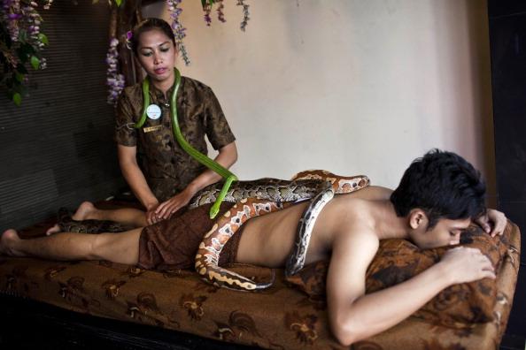 Snake「Reflexology Spa Uses Pythons To Massage Clients」:写真・画像(16)[壁紙.com]