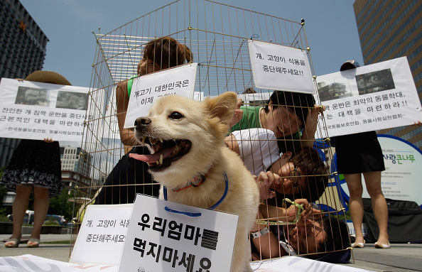 South Korea「Anti Dog Meat Protest Held In Seoul」:写真・画像(3)[壁紙.com]