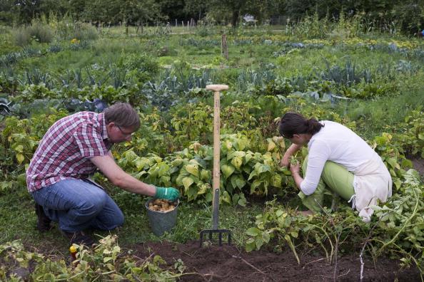 Horticulture「Urban Gardening Growing In Popularity」:写真・画像(2)[壁紙.com]