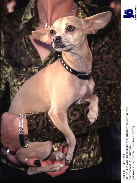 1998年映画 ゴジラ「Godzilla World Premiere At Madison Square Garden The Taco Bell Chihuahua」:写真・画像(7)[壁紙.com]
