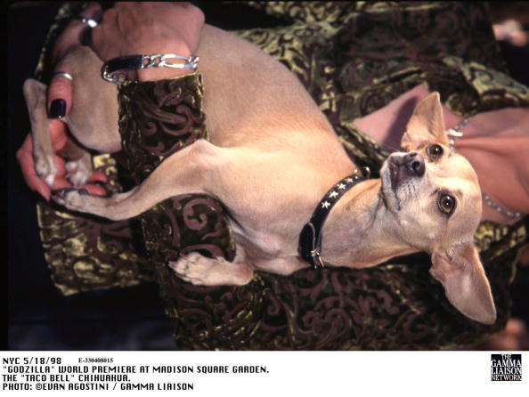 1998年映画 ゴジラ「Godzilla World Premiere At Madison Square Garden The Taco Bell Chihuahua」:写真・画像(2)[壁紙.com]
