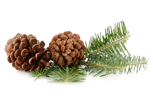 Pine Cone「Pine Cones and Needles」:スマホ壁紙(10)