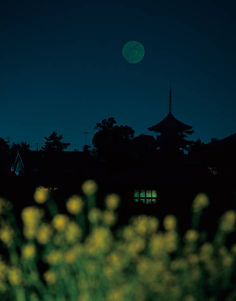 Silhouetted trees at night with rapeseed in foreground illuminated by moonlight, Kagawa Prefecture, Japan:スマホ壁紙(壁紙.com)