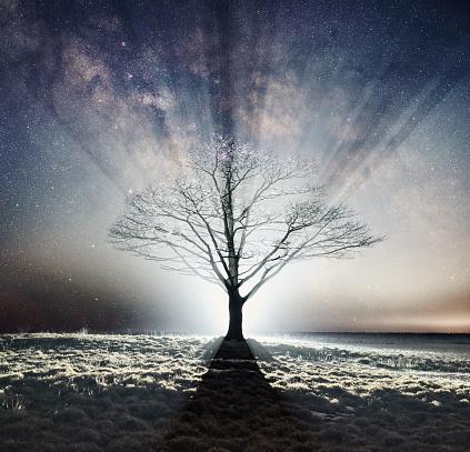 Single Tree「Silhouetted in Starlight」:スマホ壁紙(0)