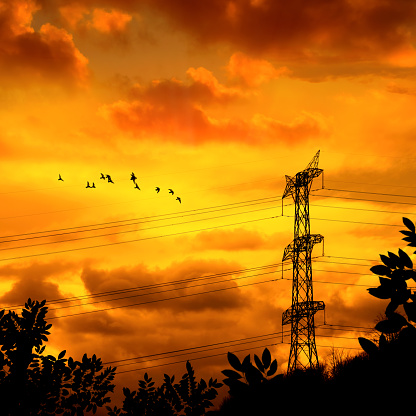 Electricity Pylon「Silhouetted electricity power line and flying flock of birds over sunset sky」:スマホ壁紙(11)