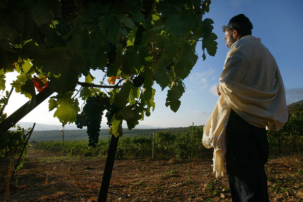 Conformity「Modern Wineries Have Ancient Roots In The Holy Land」:写真・画像(18)[壁紙.com]
