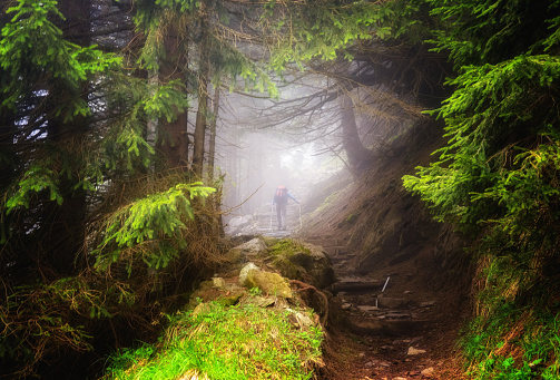 Unrecognizable Person「Man hiking in the woods, Appenzeller, Switzerland」:スマホ壁紙(5)